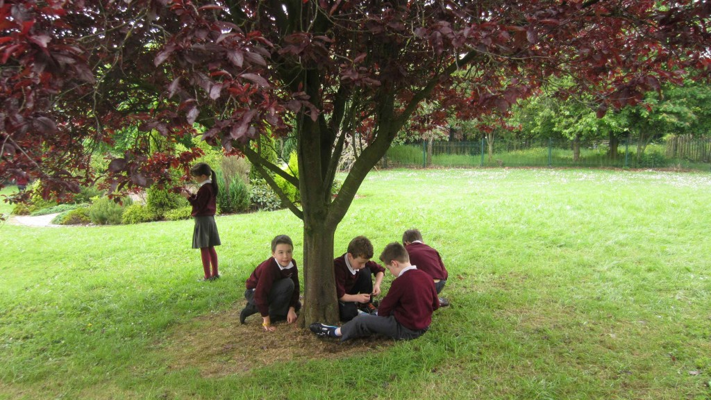 Others enjoyed  sitting under the leafy tree  while everyone took their turn.