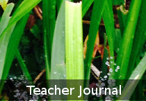 sacred_heart_ps_teacher_journal